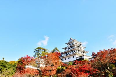 2020紅葉 日本最古の木造再建城郡上八幡の紅葉(6)