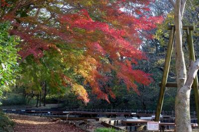 横浜の紅葉 2020 四季の森公園