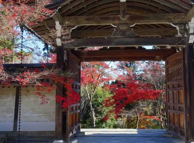 京都、少し遅めの紅葉巡り 2 【トロッコ、嵯峨、嵐山】