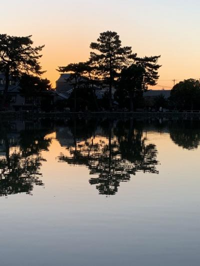 GoTo 奈良 ② 奈良公園 初日