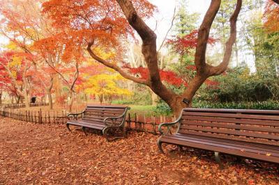 調布市・早詣の深大寺と紅葉の神代植物公園