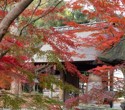 九品仏浄真寺の紅葉を訪ねて 2020