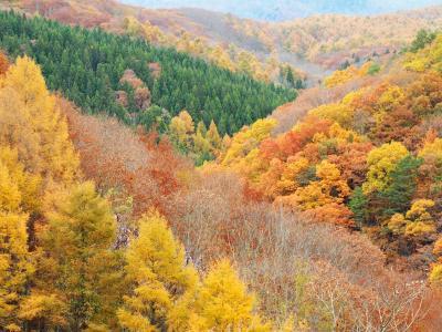 会津・裏磐梯 絶景&紅葉の旅 (3) 黄金色の森 中津川渓谷と静寂の曲沢沼