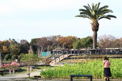 和泉リサイクル環境公園  咲き始めの菜の花、見頃のバラを見てきました。