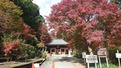 【Day out w/ N】しっかり紅葉を見てきましょう。