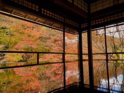 晩秋の京都ひとり旅「散りもみじ」