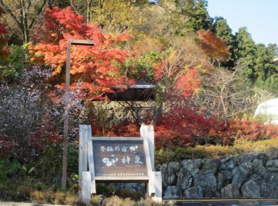 神泉は紅葉と十月桜の共演が見られる山の温泉