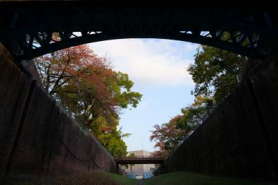 2020 大川の紅葉散歩(淀川河川公園辺り)