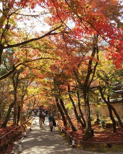 2020 京都 「宝厳院」「鹿王院」の紅葉と中華「凛香」