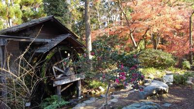 京都植物園の四季-その10(冬へ向かう)