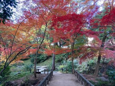 東京・有栖川宮記念公園の紅葉2020