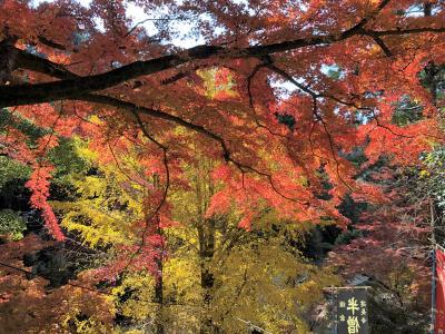 鎌倉・建長寺、ちょうど見頃の紅葉