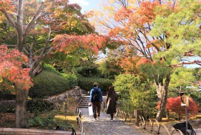 紅葉もいよいよフィナーレに♪ 冬への序奏 白鳥公園&愛知県緑化センター♪
