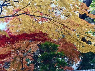 上野公園 最高の紅葉。憧れのペニンシュラホテル。綺麗なお姉さん第二弾