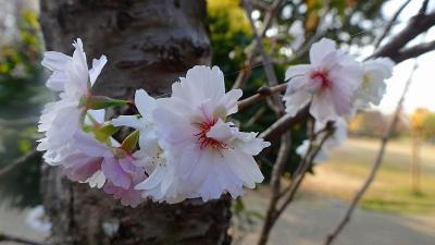 久し振りに、笹原公園へ行きましたが、花は少なかった 上巻。