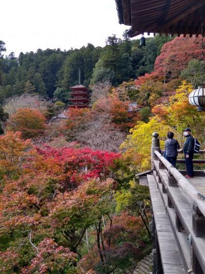 退職記念旅行第2弾: 奈良・和歌山を尋ねる(1日目)