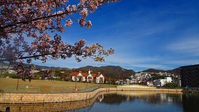 久し振りに、頭をすっきり・・・床屋へ行った帰りに新池公園付近の桜を見てきました 中巻。