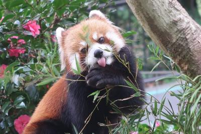 GoToで鹿児島 45年ぶりの平川動物公園で癒される