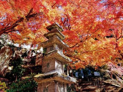 鎌倉紅葉巡りハイキング 建長寺~天園~獅子舞谷~鶴岡八幡宮