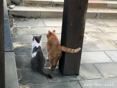九州縦断☆温泉の旅☆雲仙温泉で猫との出逢い(2020)【2.後編】