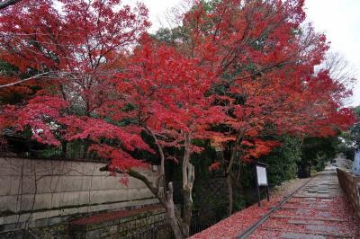 歴史息づく京の都を逍遥する旅