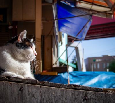 北九州ひとり旅05: 錆びたシャッターが並ぶ哀愁が凄まじかった大正町商店街