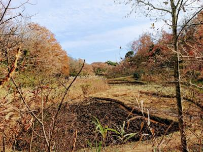 初冬の舞岡公園