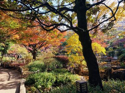 初冬の掃部山公園 伊勢山皇太神宮 横浜公園 日本大通り 赤レンガ倉庫