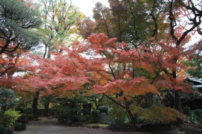 旧朝倉家住宅に再度紅葉を見に行く2020年12月