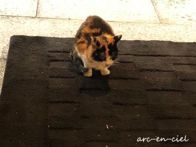 九州縦断☆温泉の旅☆妙見石原荘では猫がお出迎え(2020)