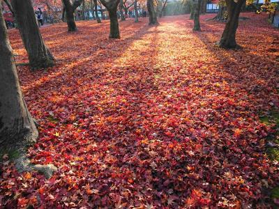 2020年名残の紅葉を求めて京都 その2東福寺の早朝特別拝観ほか
