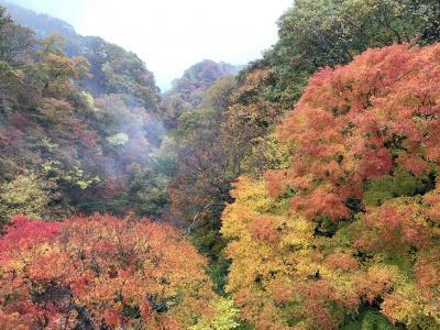 2020九州一早い紅葉と温泉を求めて久住へ ー 楽して見る紅葉編 ー