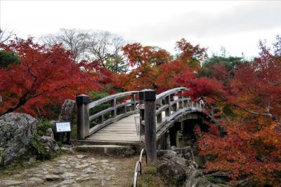 2019年11月 滋賀県 湖東三山 その6 彦根城そばの名称玄宮楽々園の紅葉