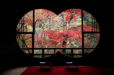 秋の京都で紅葉三昧 (2) 嵐山 天龍寺・宝厳院と新たな紅葉スポット祐斎亭