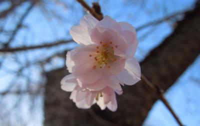 素晴らしかった冬桜