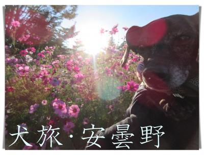 犬旅 ~安曇野・2020秋~