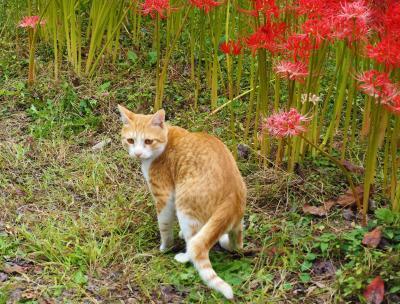 鹿沼市にある常楽寺で曼珠沙華と蕎麦の花のコラボが見られるというので行ってきました
