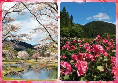 ☆2020年春☆ 何とな~く不安な心地で巡った近場の花たち