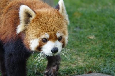 和歌山アドベンチャーワールド 2020年の動物園締めはアドベンへ マルル君とは半年ぶりに会え、しっかりと后ちゃんにも会えました