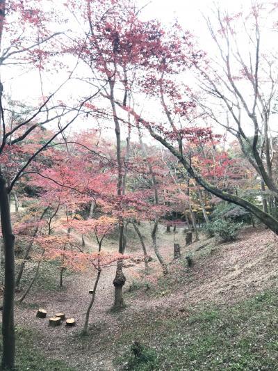 犬とお散歩。旭公園から片道2.6キロ32分。日長神社すぐの紅葉谷へ。紅葉がいっぱいで色鮮やかです。