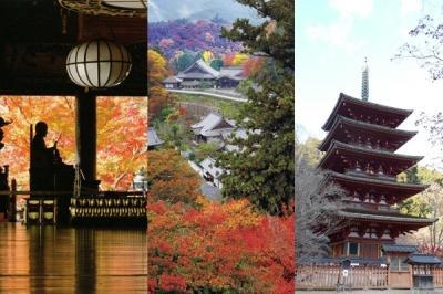 うましうるわし奈良の都を訪ねて(No.2)ー 春日大社、長谷寺、法隆寺、薬師寺、唐招提寺、慈光院、大神神社を見学