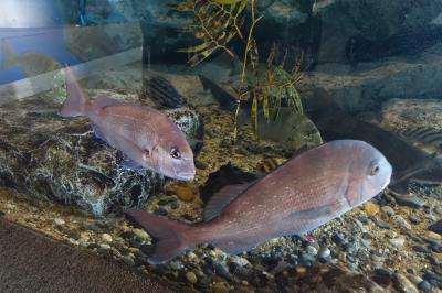 日本最大級のアマゾン水槽&日本では珍しい淡水魚の水族館へ・・