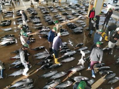 2020秋の那智勝浦 その2は勝浦漁港魚市場と道の駅