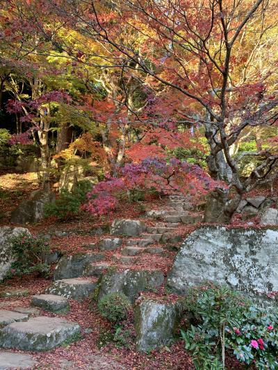 湖国の紅葉を巡る旅2 百済寺と教林坊ライトアップ…残念な夕食