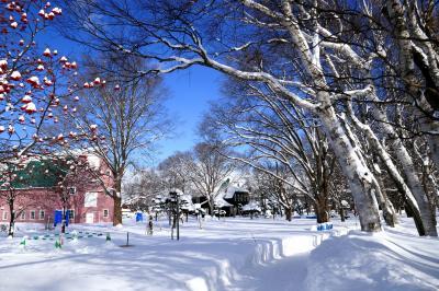 地元の雪景色