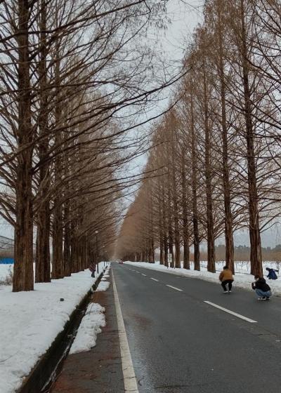 雪のメタセコイヤ並木