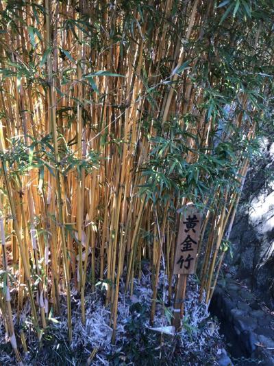 伊豆高原の別荘で年末年始 神祇大社初詣