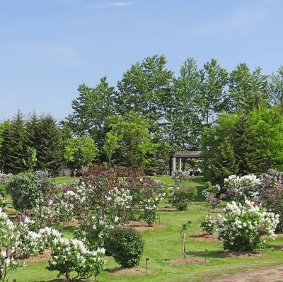 花の札幌 川下公園ライラックの森 II