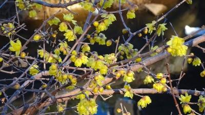 暖かい温室に咲く花を見に、伊丹市昆虫館へ行きました その1。