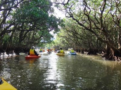 固有の動植物が棲まう幻想の大自然奄美大島へ